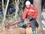 山の木の伐採作業